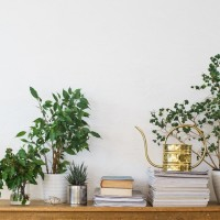 Houseplants To Spruce Up Your Style